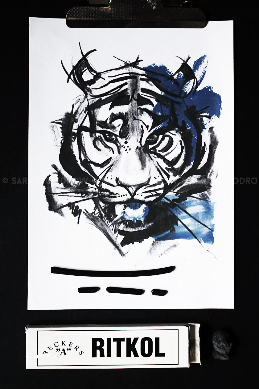 Blue_Tiger_02
