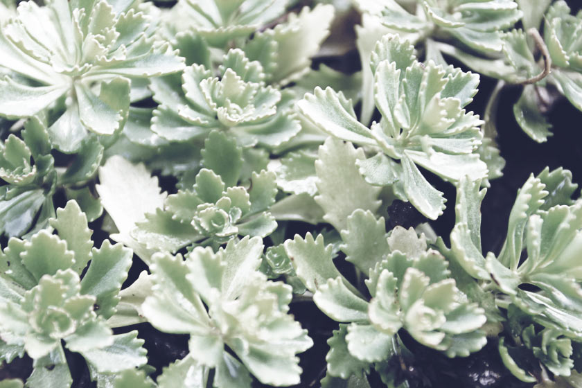 Lovely_Succulents_02