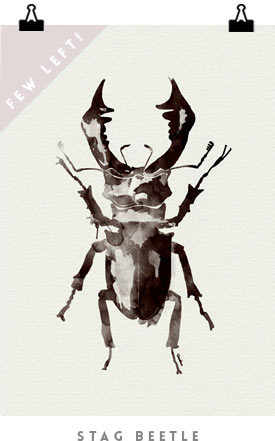 Stag_Beetle