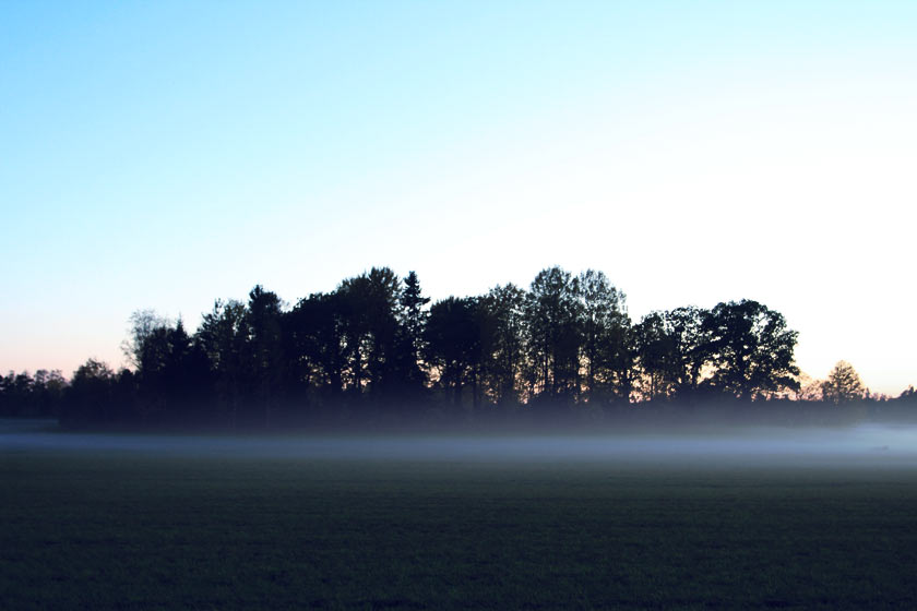 The_Mist_03