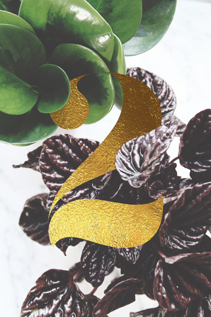 Växter_01