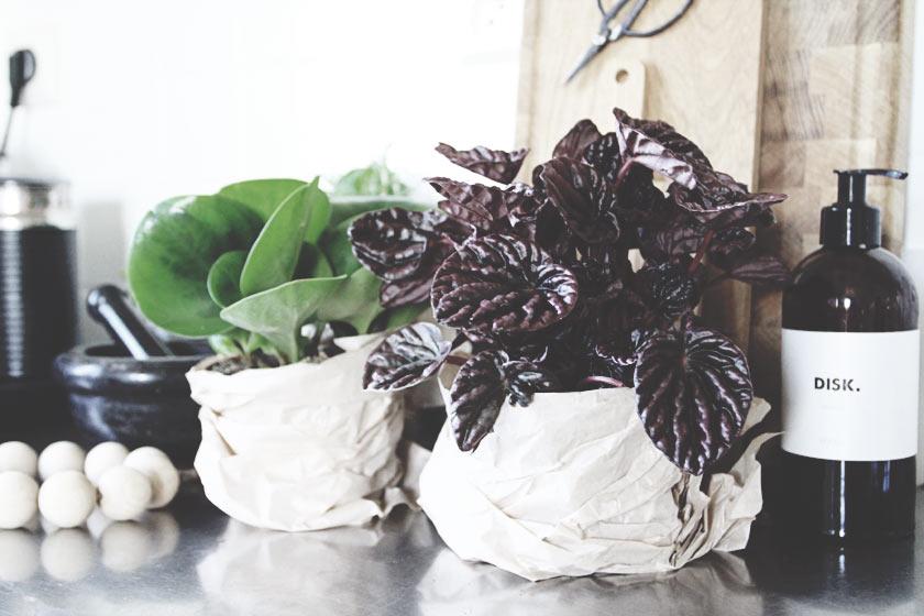 Växter_02