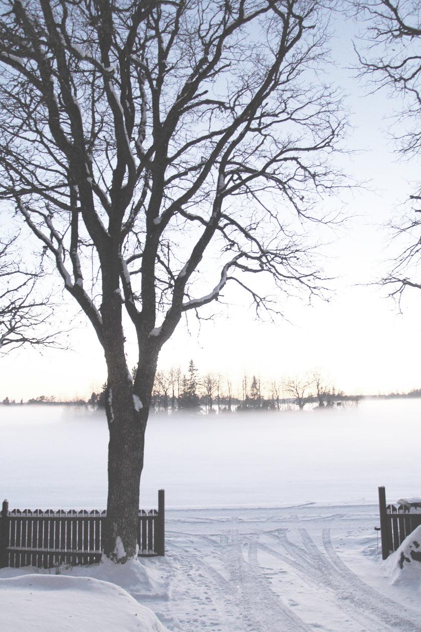 Snow_Mist_01