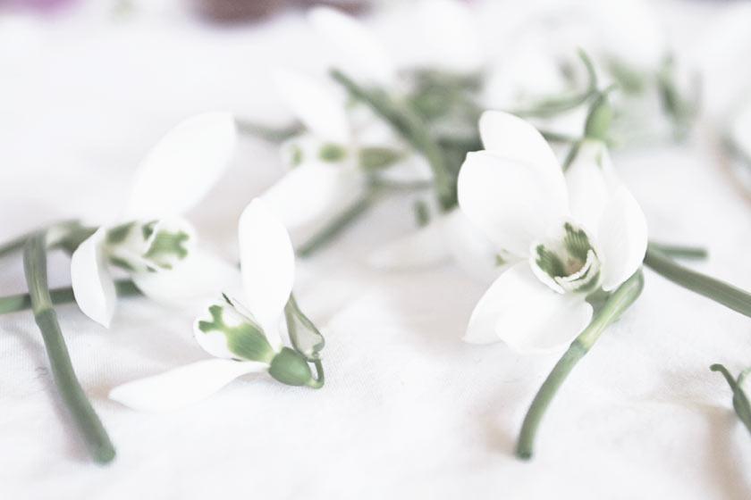 Flower_Mandala_03