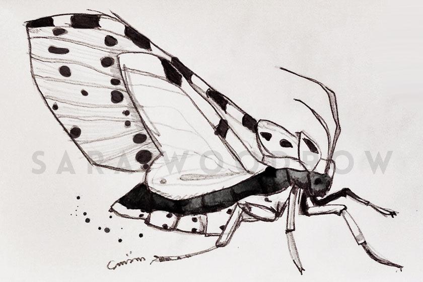 Moth_Blue_Velvet_02