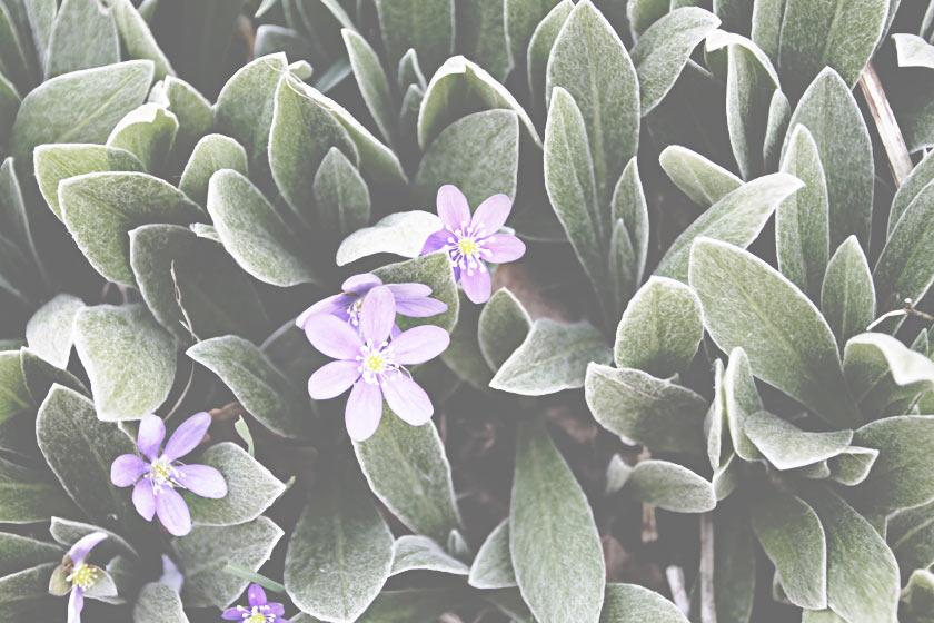 In_The_Garden_09