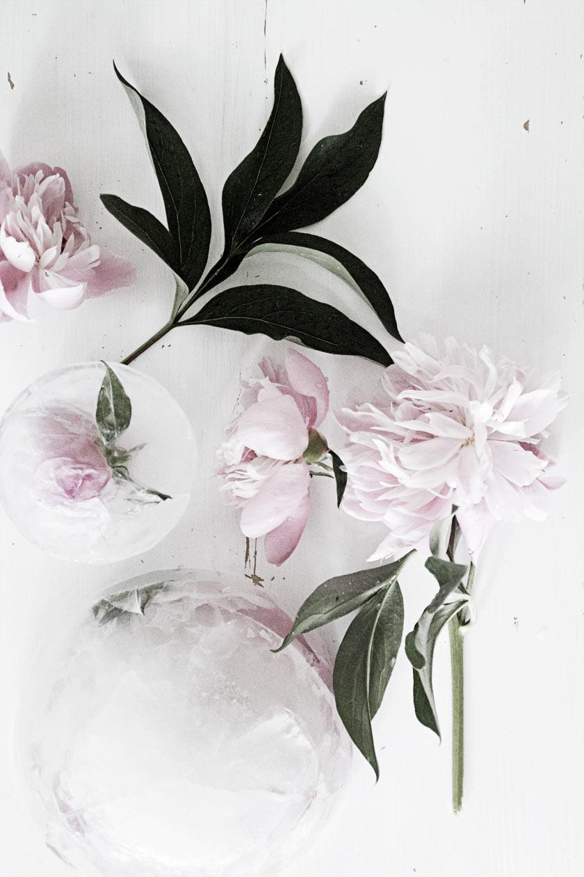 Ice_Flowers_02