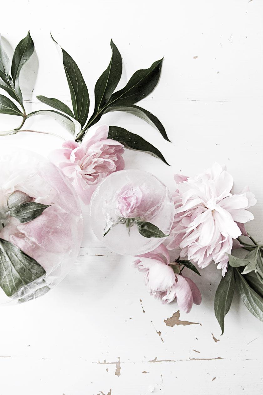 Ice_Flowers_04