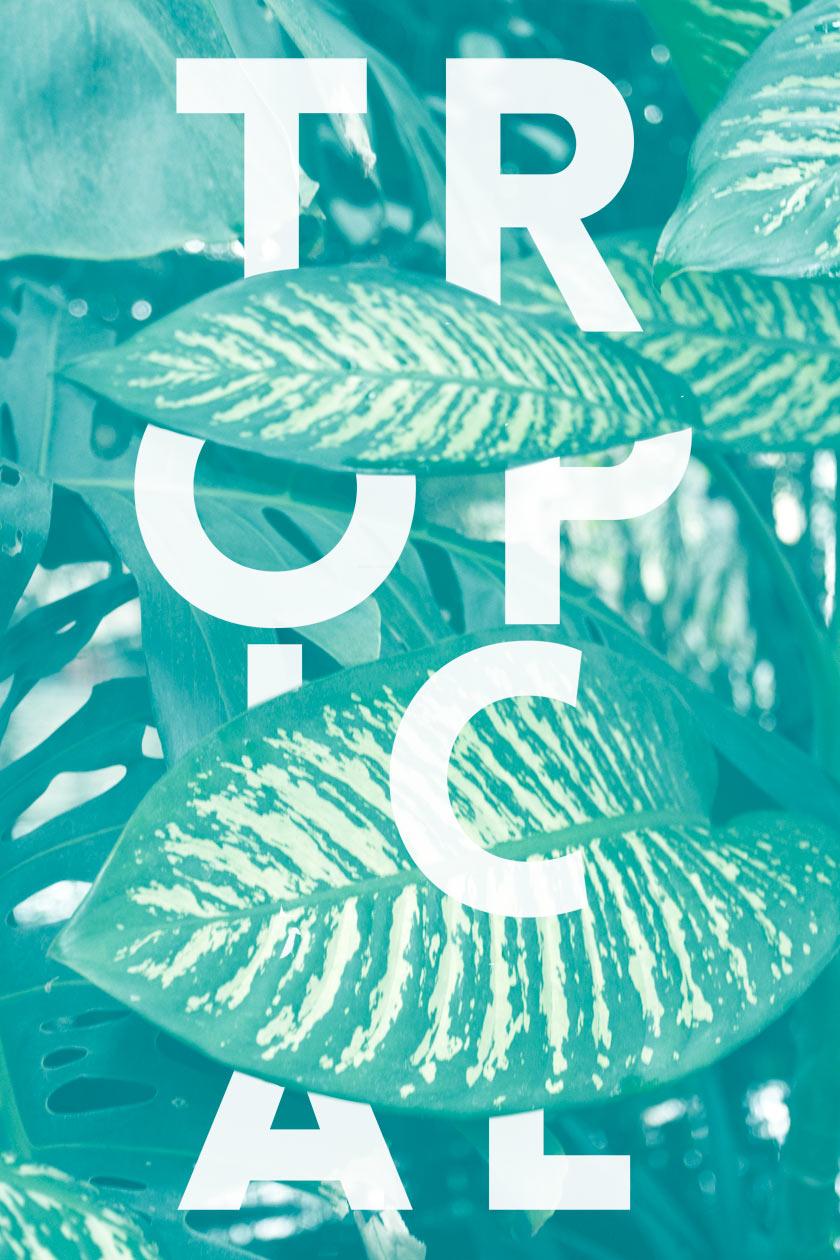 Tropical_01
