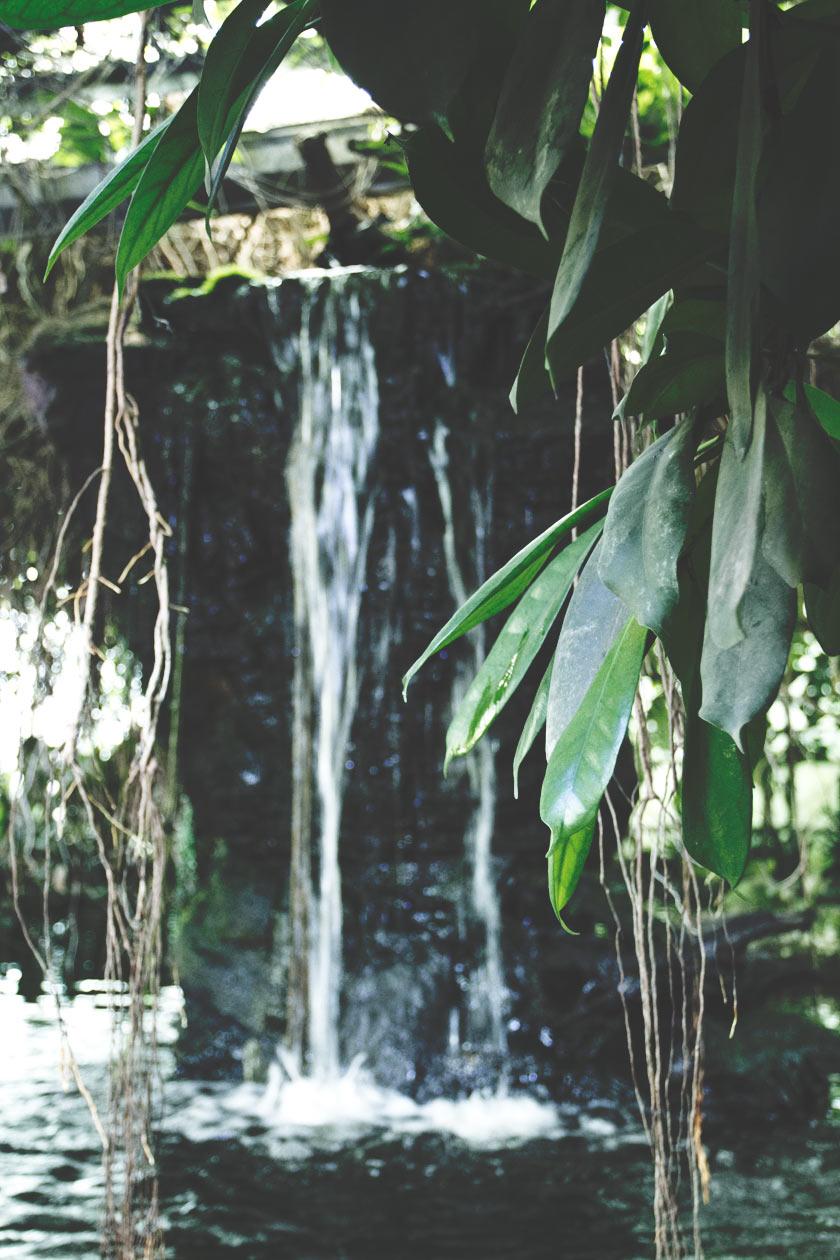 Tropical_05