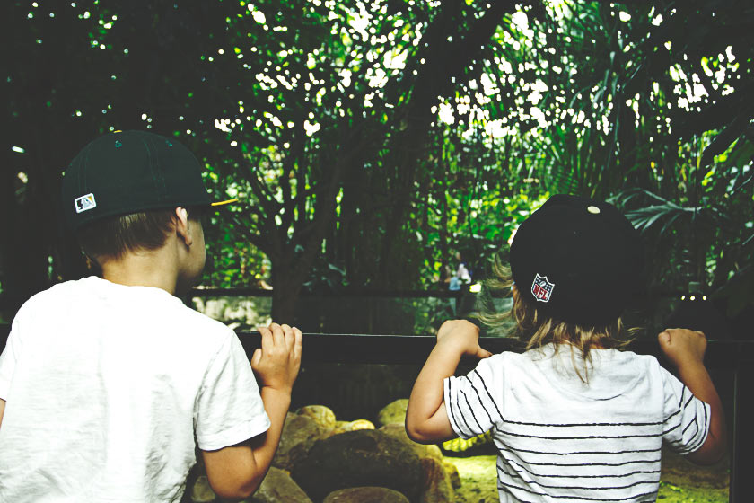 Tropical_14