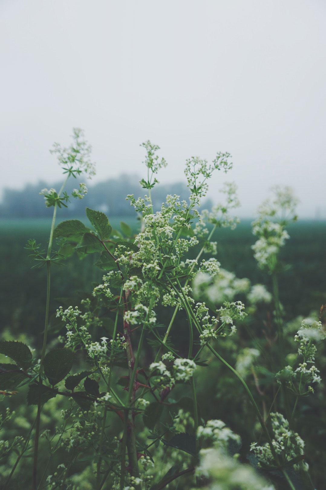 June_03